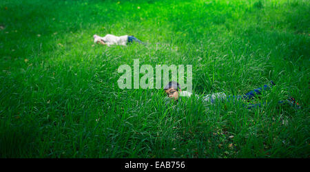 Hiding in the long grass. Boy and girl pay in meadow. - Stock Image