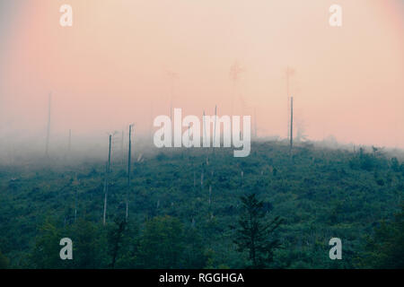 Mountainside, trees destroyed by wind and acid rains, covered by mist and clouds - Stock Image