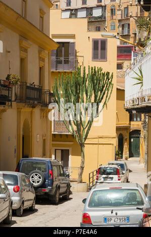 Italy Sicily Agrigento narrow road street scene parked cars giant cactus tree balconies terraced houses flats apartment blocks condos blinds canopies - Stock Image