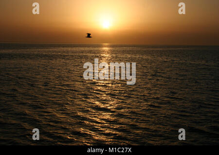 Golden sunset over the sea and the flying bird, the Red Sea, Egypt - Stock Image