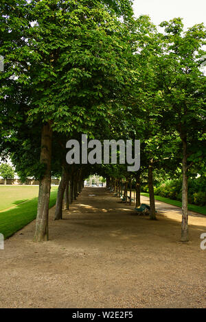 Avenue of chestnut trees in the Jardin des plantes le thabor, Rennes, captial of Brittany, France - Stock Image