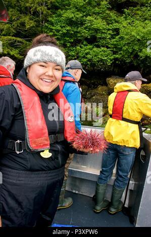 Harvesting spiny sea urchins (Echinoidea) along northern British Columbia coast low tide - Stock Image