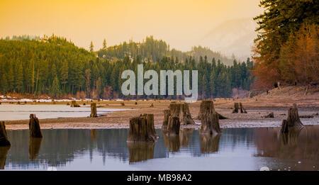 Stump Lake - Stock Image