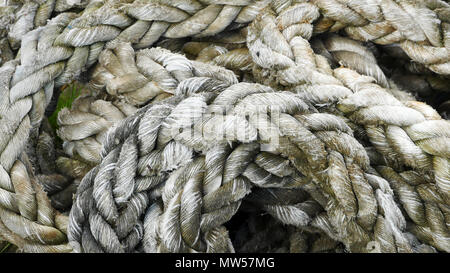 coils of old rope background - Stock Image