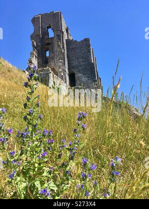 The spectacular, romantic ruin of Corfe Castle, Isle of Purbeck, Dorset, England - Stock Image