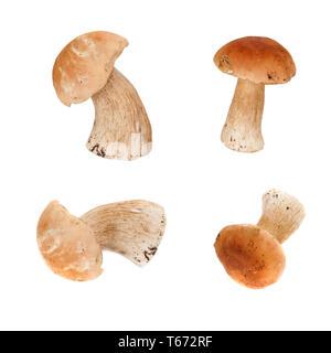 Group of edible mushrooms Boletus isolated on white background - Stock Image