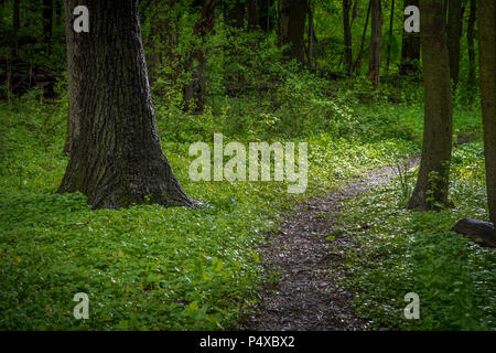 Walking Trail Through Wooded Forest After Light Rain - Stock Image