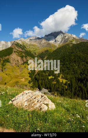 Cinqueta de Añes Cruces river with Pinar del Clot pine forest and Posets massif at the back (Viadós, Chistau valley, Huesca, Pyrenees, Aragon, Spain) - Stock Image