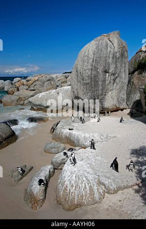 SA simon s town boulders beach jackass penguin colony rocks - Stock Image