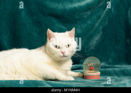 White female cat is lying on a dark aquamarine blanket, next to a crystal snowball with a mouse in it. - Stock Image