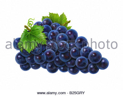 Grapes Violet - Stock Image