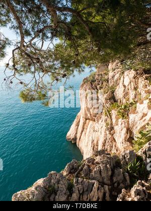 Rocky coast and pine trees over the calm blue sea in Croatia - Stock Image