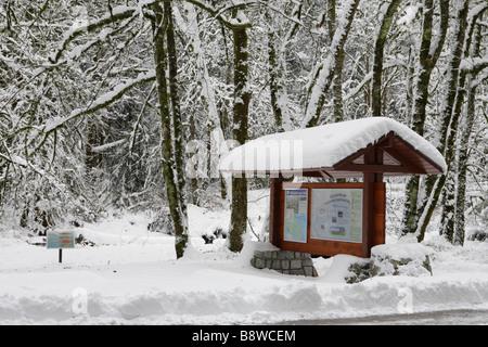Rare snowfall in temperate rainforest Victoria British Columbia Canada - Stock Image