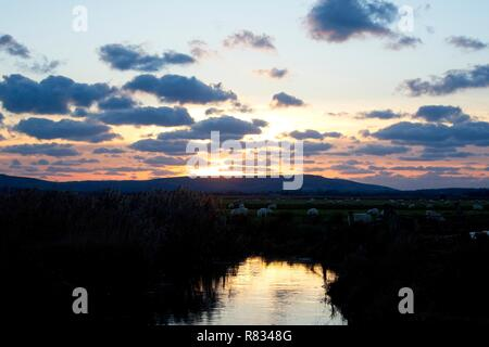 Pevensey Levels, UK. 12th Dec 2018.UK weather. Sunset over a flock of sheep this evening on the Pevensey Levels in East Sussex, UK. Credit: Ed Brown/Alamy Live News - Stock Image