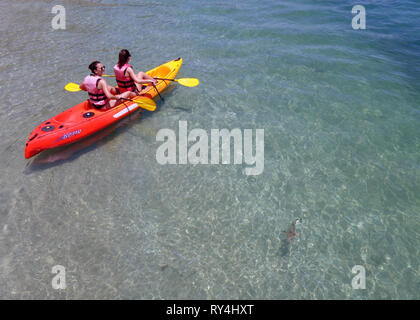 Girls on kayak viewing juvenile blacktip reef sharks (Carcharhinus melanopterus) in the shallows at Fitzroy Island, Great Barrier Reef - Stock Image