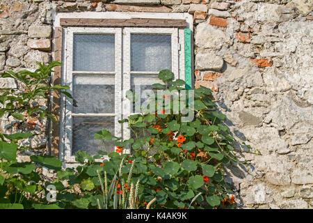 Fenster Mit Wuchernen Gartenpflanzen Und -Blumen - Stock Image