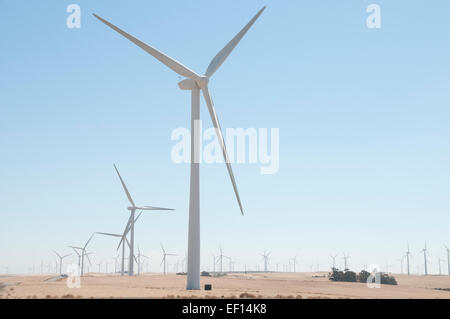 Turbines on wind farm near Sacramento, California on a hot, cloudless day. - Stock Image