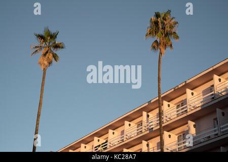 Palm tress against a clear blue sky outside the Guitart Rosa hotel, Lloret de Mar - Stock Image