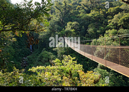Canopy Tree Trek in Boquete, Panama - Stock Image