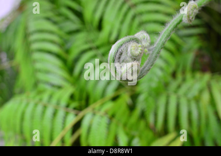 Green young ferns details - Stock Image