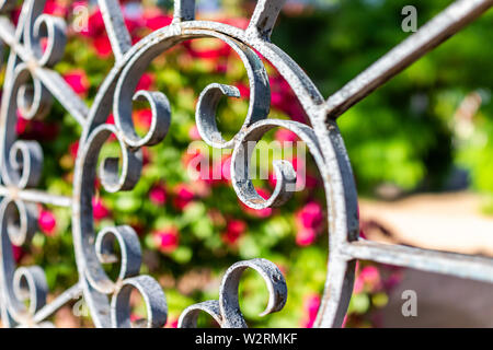 Closeup of metal fence in garden outdoors with red flowers in bokeh blurry background abstract view - Stock Image