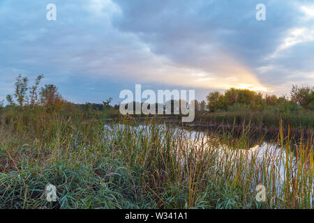 Evening or sunrise on a quiet forest lake in the summer - Stock Image