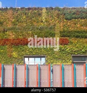 Eco green living wall, office building in Camden, London - Stock Image