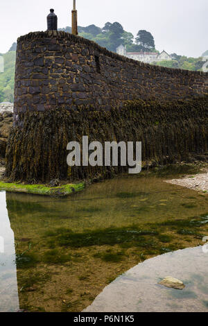 The harbour wall encrusted with seaweed at Lynmouth, North Devon, UK. - Stock Image