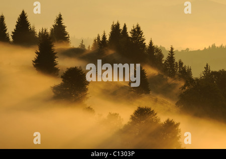 landscape in dzembronya area in ukraine at dawn - Stock Image