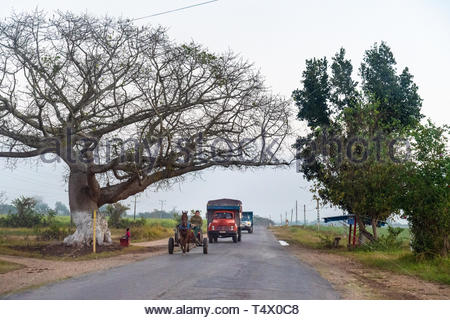 Villa Clara, Cuba, horse drawn cart driving in rural road and slowing the motor vehicles on the same road. - Stock Image