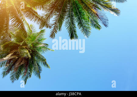Palm tree on sky background - Stock Image