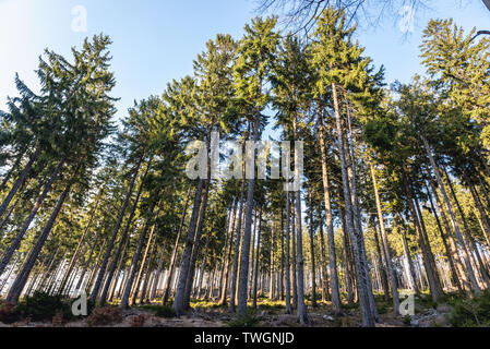 Forest in Landscape Park of Gory Sowie (Owl Mountains) mountain range near Jugow village in Central Sudetes, Poland - Stock Image