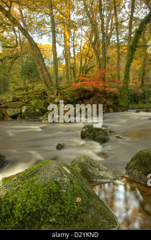 Autumn colours around the River Plym in the Dewerstone Woods in Dartmoor - Stock Image
