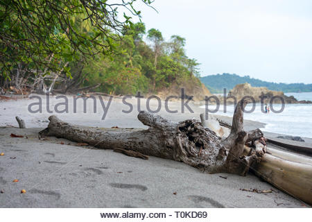 Beach in the Manuel Antonion area of Costa Rica - Stock Image