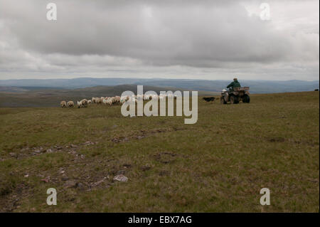 Hill farming - Stock Image