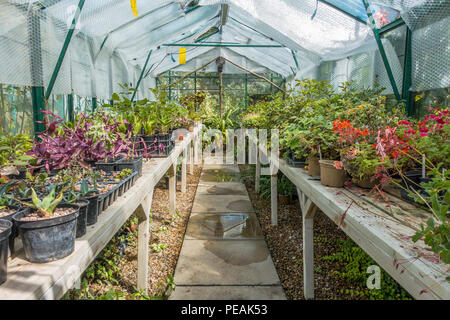 Small,Commercial,Greenhouse, - Stock Image