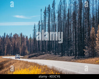 Car driving on highway surrounded by blackened trees from recent forest fire. Yellowstone National Park, Wyoming 2016. - Stock Image