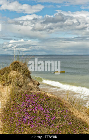 FINDHORN MORAY COAST SCOTLAND PURPLE FLOWERS OF BELL HEATHER ERICA CINEREA GROWING ON A SAND DUNE NEAR THE SEA ALSO A SPEEDBOAT AND WORLD WAR II SUBME - Stock Image