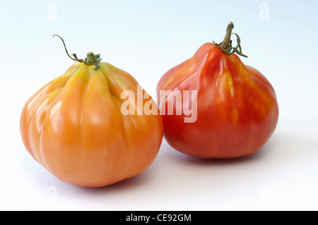 Tomato (Lycopersicon esculentum), variety: Giant Ox Hearth-Tomato, Bulls Heart-Tomato, two fruit - Stock Image