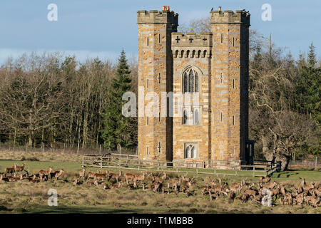 Folly and Large Herd of Stag and Hinds. Berkeley Deer Park. - Stock Image