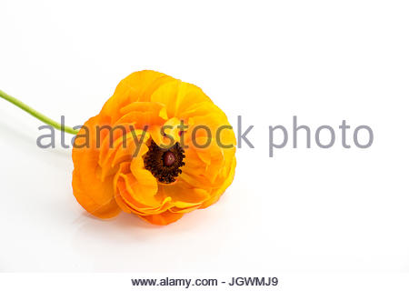 Orange Flower - Stock Image