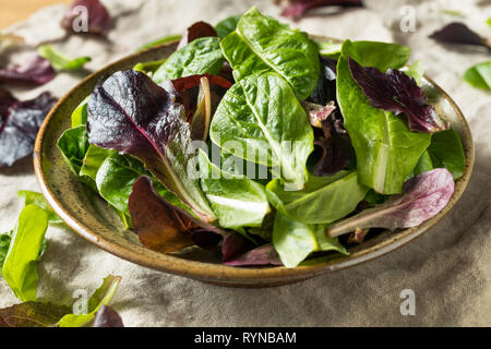 Raw Green Organic Baby Romaine Lettuce in a Bowl - Stock Image