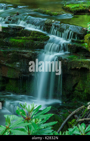 Waterfalls on Rhododendron Creek in Greenbrier, Great Smoky Mountains National Park ,TN - Stock Image
