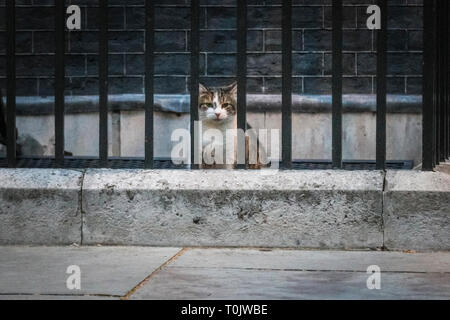 Downing Street, London, UK, 20th Mar 2019. Larry, the Downing Street Cat, remains calm and his usual collected feline self. Palmerston and Larry, often known to have had tense feline relations, appear to keep their peace on a turbulent day of rather un-peaceful political tensions in Westminster. Credit: Imageplotter/Alamy Live News - Stock Image