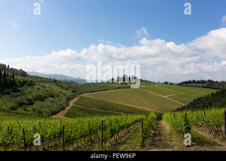Typical Tuscan landscape, rolling hills with vineyards - Stock Image