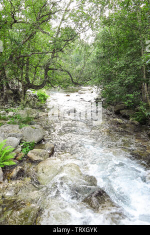 Sant Nicolau river inside the Aigüestortes National Park in the Catalan Pyrenees, Spain - Stock Image