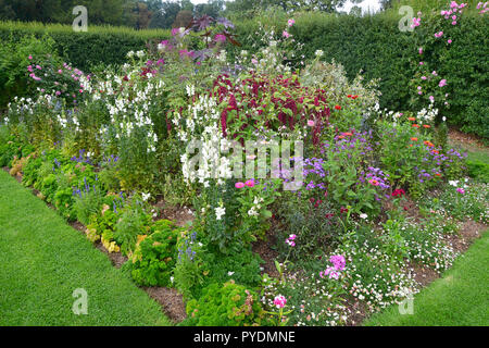 Colourful flower border with mixed planting including roses, amaranthus, zinnia and antirrhinums - Stock Image