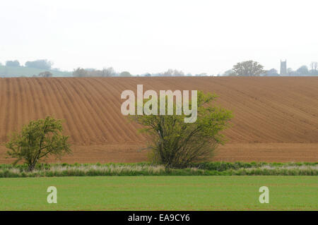 Ploughed field in the Cotswolds - Stock Image