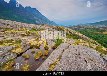 Lichen and cottonsedge plants are growing on the fjell near Bodø in Nordland, Norway. - Stock Image