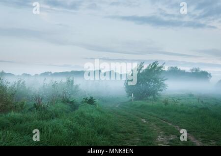 A tree appearing the mist early in the morning in the English countryside - Stock Image